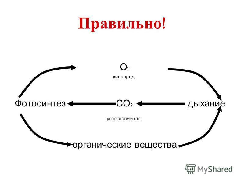 Правильно ! О 2 кислород Фотосинтез СО 2 дыхание углекислый газ органические вещества