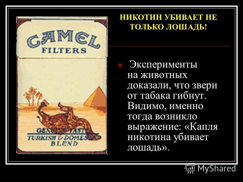 Эксперименты на животных доказали, что звери от табака гибнут. Видимо, именно тогда возникло выражение: «Капля никотина убивает лошадь». НИКОТИН УБИВАЕТ НЕ ТОЛЬКО ЛОШАДЬ!