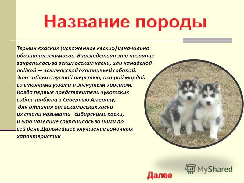 Термин «хаски» (искаженное «иски») изначально обозначал искимосов. Впоследствии это название закрепилось за искимосским хаски, или канадской лайкой искимосской охотничьей собакой. Это собаки с густой шерстью, острой мордой со стоячими ушами и загнуты