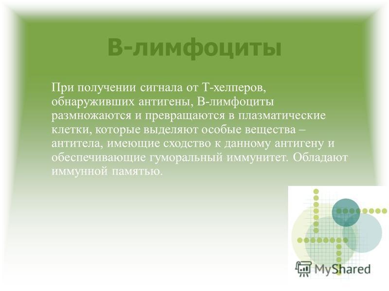 В-лимфоциты При получении сигнала от Т-хелперов, обнаруживших антигены, В-лимфоциты размножаются и превращаются в плазматические клетки, которые выделяют особые вещества – антитела, имеющие сходство к данному антигену и обеспечивающие гуморальный имм