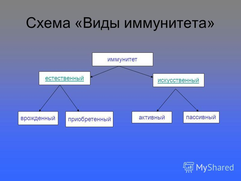 Схема «Виды иммунитета» иммунитет естественный искусственный врожденный приобретенный активный пассивный