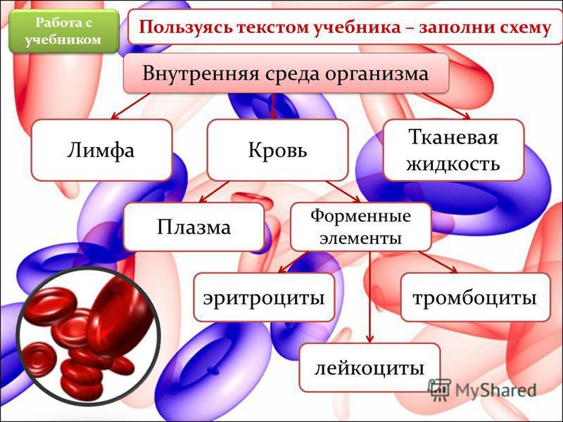 Внутренняя среда организма Лимфа Кровь Тканевая жидкость Плазма Форменные элементы тромбоциты лейкоциты эритроциты Работа с учебником Пользуясь текстом учебника – заполни схему