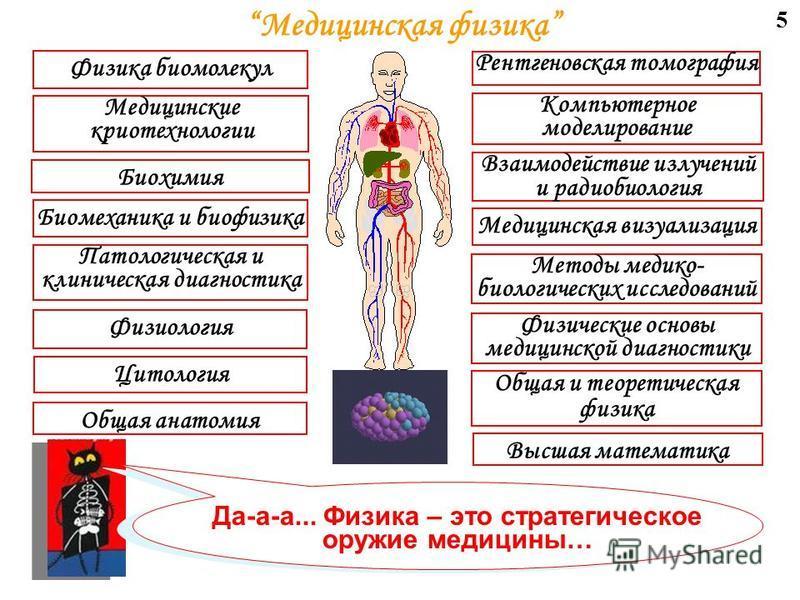 4 Фундаментальные проблемы Физико- математические модели различных органов и систем человека Исследование полей и процессов в человеке в норме и при патологии Взаимодействие организма человека с физическими излучениями Прикладные задачи Физиологическ