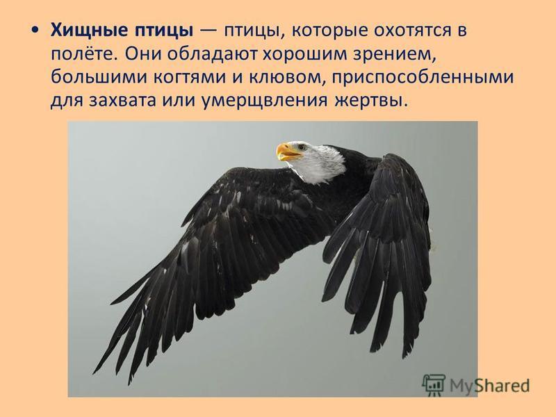 Хищные птицы птицы, которые охотятся в полёте. Они обладают хорошим зрением, большими когтями и клювом, приспособленными для захвата или умерщвления жертвы.