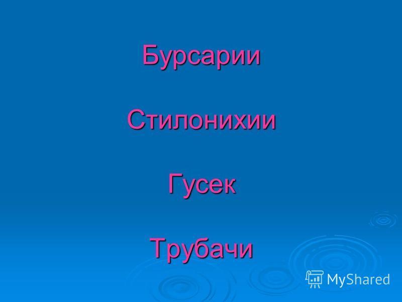 Бурсарии Стилонихии Гусек Трубачи