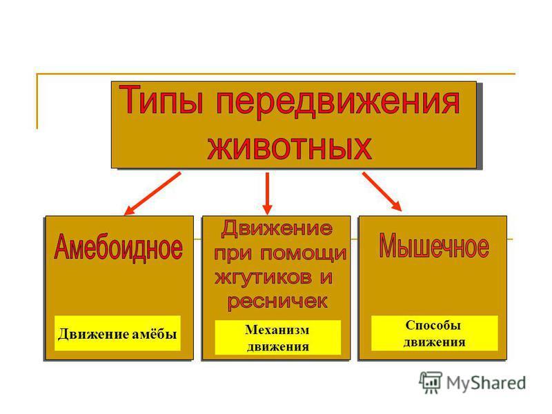 Движение амёбы Механизм движения Способы движения