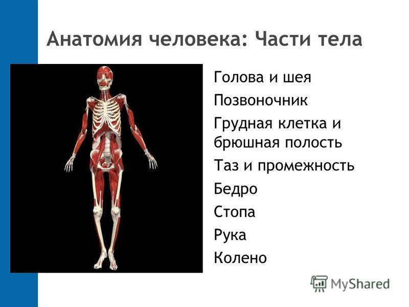 Анатомия человека: Части тела Голова и шея Позвоночник Грудная клетка и брюшная полость Таз и промежность Бедро Стопа Рука Колено