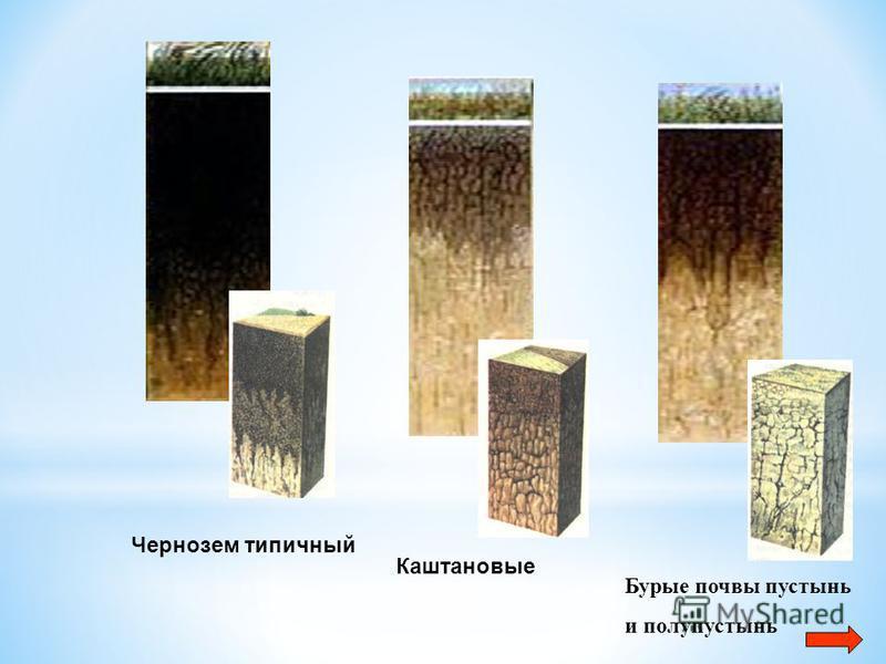 Бурые почвы пустынь и полупустынь Каштановые Чернозем типичный