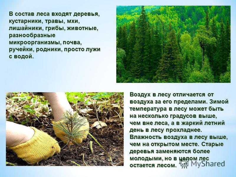 В состав леса входят деревья, кустарники, травы, мхи, лишайники, грибы, животные, разнообразные микроорганизмы, почва, ручейки, родники, просто лужи с водой. Воздух в лесу отличается от воздуха за его пределами. Зимой температура в лесу может быть на