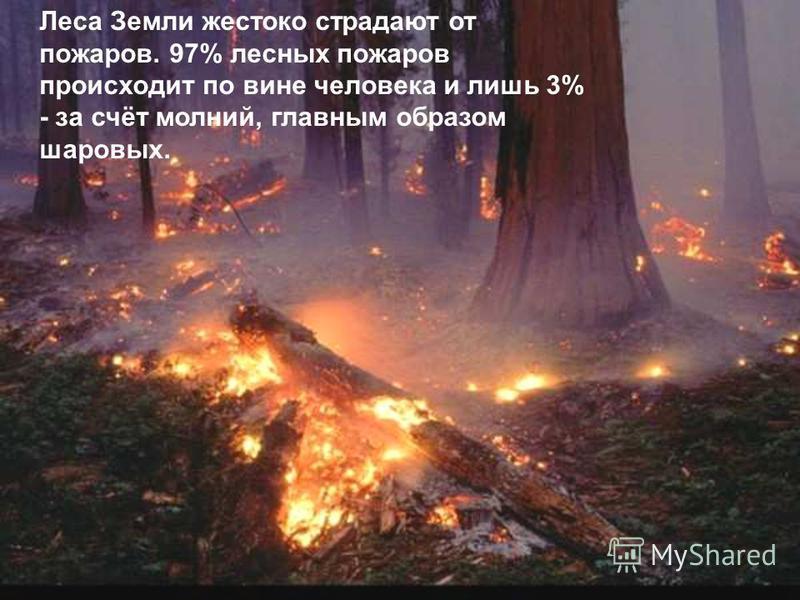 Леса Земли жестоко страдают от пожаров. 97% лесных пожаров происходит по вине человека и лишь 3% - за счёт молний, главным образом шаровых.