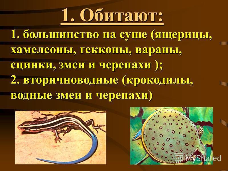 1. Обитают: 1. большинство на суше (ящерицы, хамелеоны, гекконы, вараны, сцинки, змеи и черепахи ); 2. вторичноводные (крокодилы, водные змеи и черепахи)