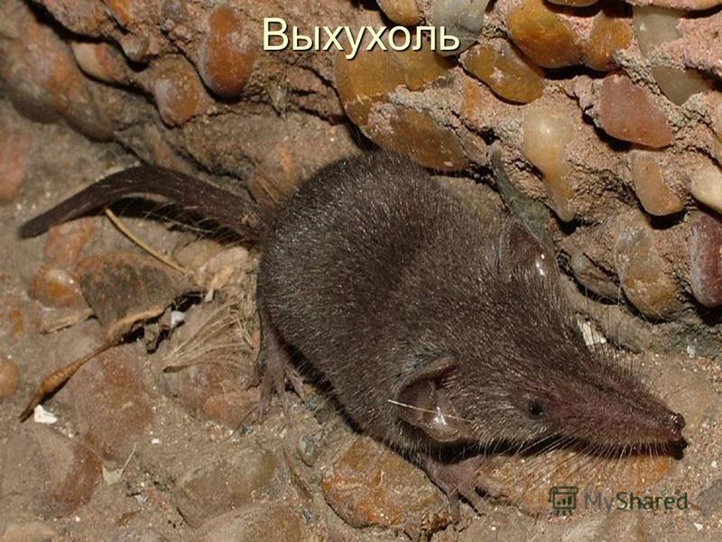 Млекопитающие 31 вид Птицы 85 видов Пресмыкающиеся 4 вида Земноводные 2 вида Рыбы 9 видов Беспозвоночные 107 видов