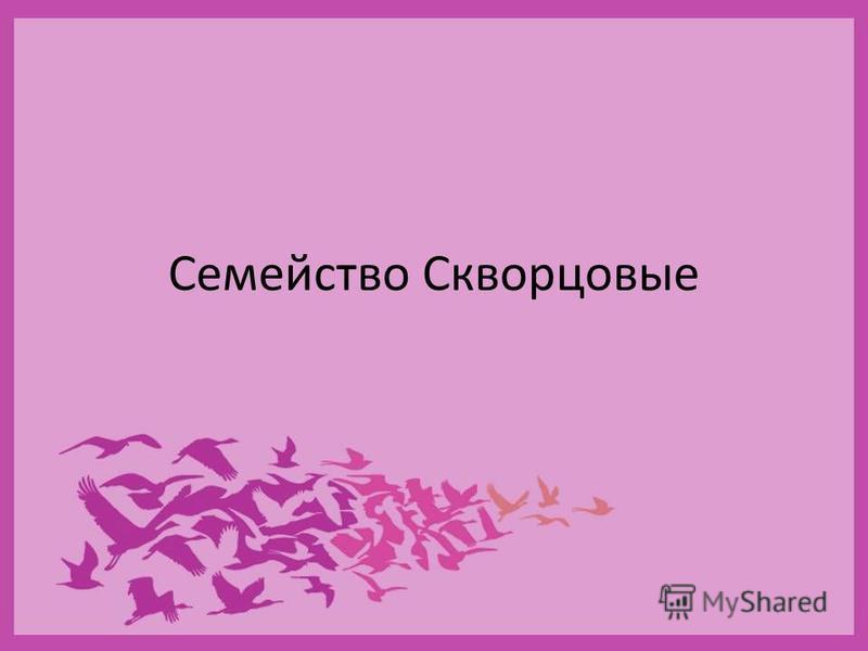 Сойка