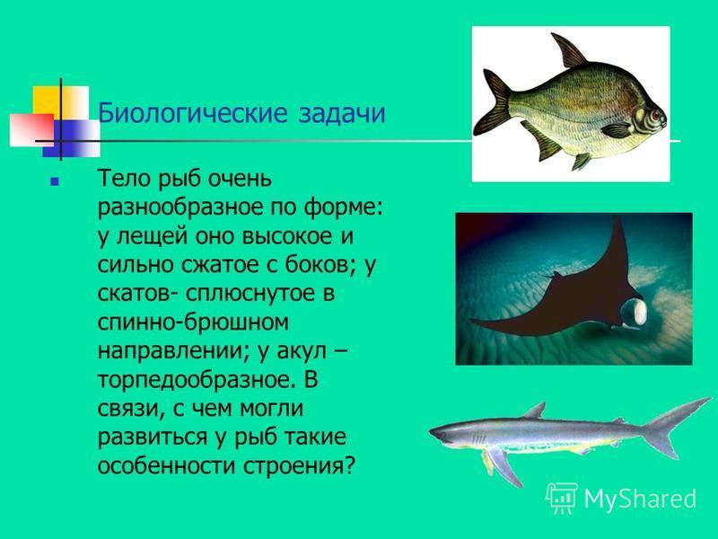 Биологические задачи Тело рыб очень разнообразное по форме: у лещей оно высокое и сильно сжатое с боков; у скатов- сплюснутое в спинно-брюшном направлении; у акул – торпедообразное. В связи, с чем могли развиться у рыб такие особенности строения?