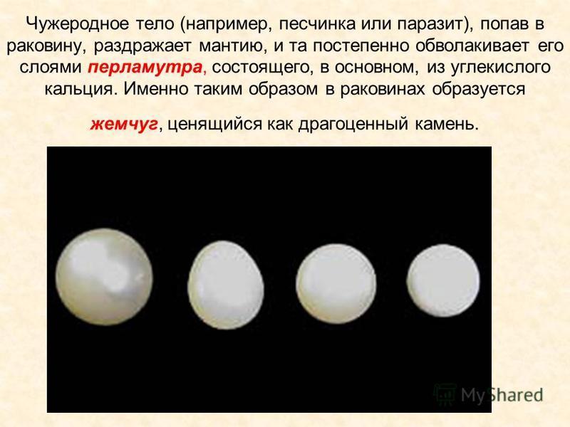 Чужеродное тело (например, песчинка или паразит), попав в раковину, раздражает мантию, и та постепенно обволакивает его слоями перламутра, состоящего, в основном, из углекислого кальция. Именно таким образом в раковинах образуется жемчуг, ценящийся к