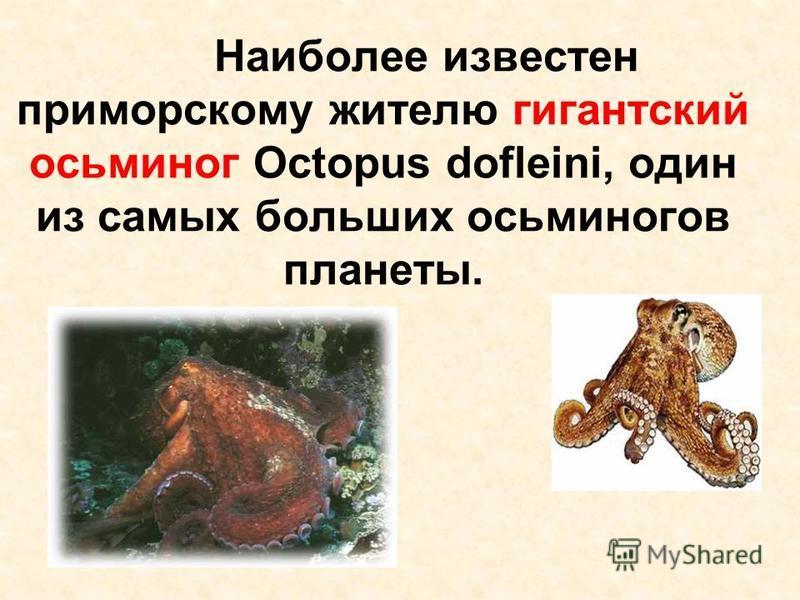 Наиболее известен приморскому жителю гигантский осьминог Octopus dofleini, один из самых больших осьминогов планеты.