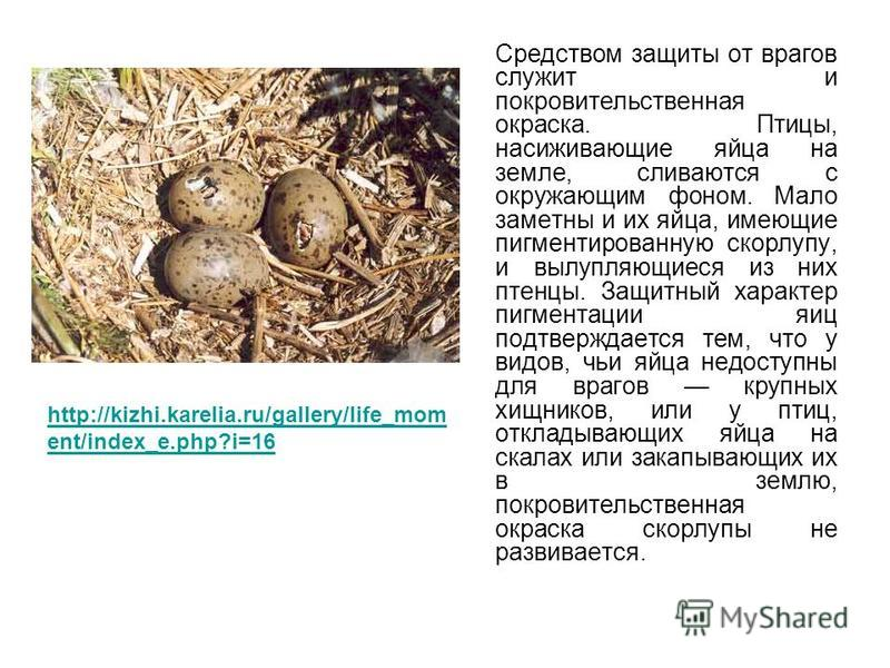 Средством защиты от врагов служит и покровительственная окраска. Птицы, насиживающие яйца на земле, сливаются с окружающим фоном. Мало заметны и их яйца, имеющие пигментированную скорлупу, и вылупляющиеся из них птенцы. Защитный характер пигментации