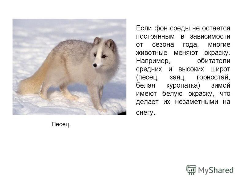Если фон среды не остается постоянным в зависимости от сезона года, многие животные меняют окраску. Например, обитатели средних и высоких широт (песец, заяц, горностай, белая куропатка) зимой имеют белую окраску, что делает их незаметными на снегу. П
