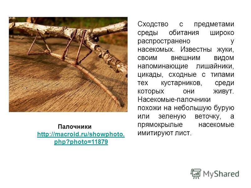 Сходство с предметами среды обитания широко распространено у насекомых. Известны жуки, своим внешним видом напоминающие лишайники, цикады, сходные с типами тех кустарников, среди которых они живут. Насекомые-палочники похожи на небольшую бурую или зе