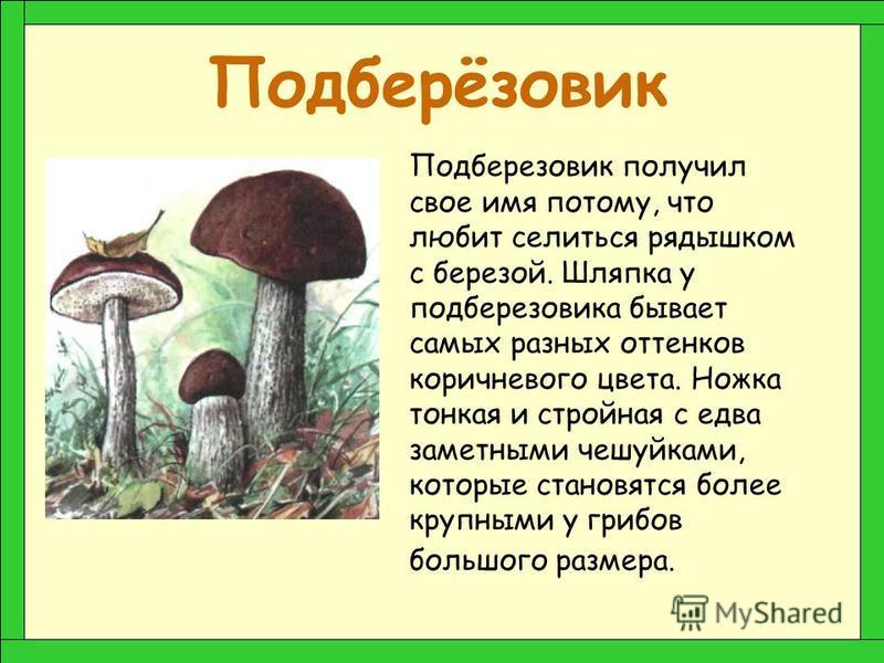 Подосиновик Белый гриб Сыроежка Лисичка Рыжик Волнушка Груздь Маслёнок Опёнок Подберёзовик