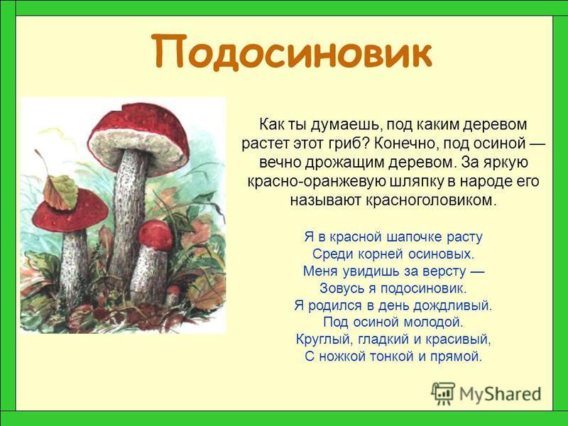 Подберезовик получил свое имя потому, что любит селиться рядышком с березой. Шляпка у подберезовика бывает самых разных оттенков коричневого цвета. Ножка тонкая и стройная с едва заметными чешуйками, которые становятся более крупными у грибов большог