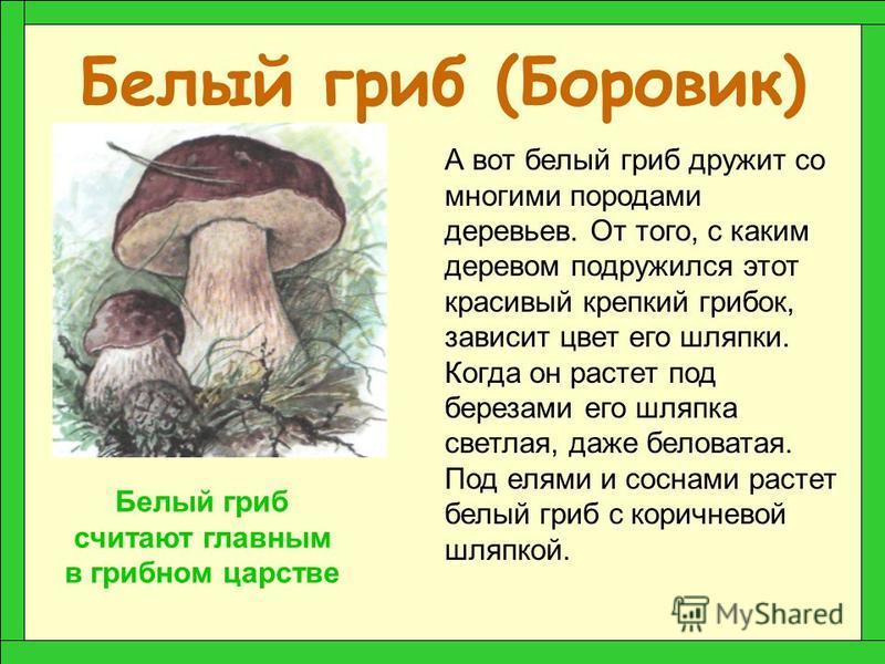 Подосиновик Как ты думаешь, под каким деревом растет этот гриб? Конечно, под осиной вечно дрожащим деревом. За яркую красно-оранжевую шляпку в народе его называют красноголовиком. Я в красной шапочке расту Среди корней осиновых. Меня увидишь за верст