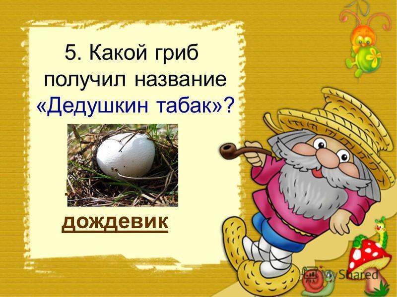 4. Из какого гриба раньше делали чернила? навозник шампиньон подосиновик
