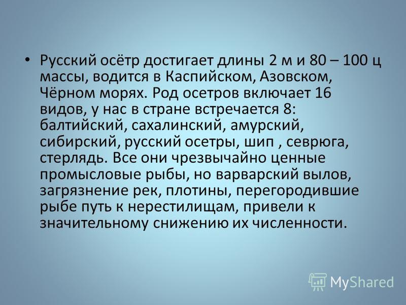 Русский осётр достигает длины 2 м и 80 – 100 ц массы, водится в Каспийском, Азовском, Чёрном морях. Род осетров включает 16 видов, у нас в стране встречается 8: балтийский, сахалинский, амурский, сибирский, русский осетры, шип, севрюга, стерлядь. Все