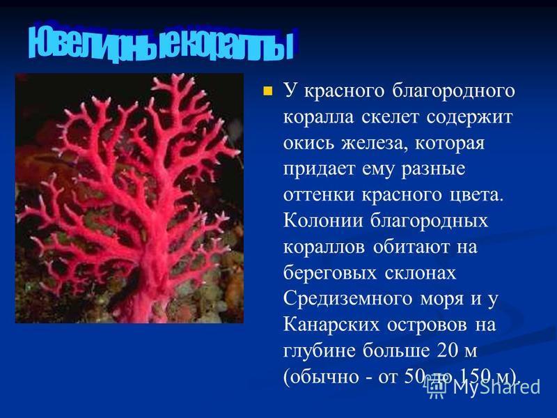 У красного благородного коралла скелет содержит окись железа, которая придает ему разные оттенки красного цвета. Колонии благородных кораллов обитают на береговых склонах Средиземного моря и у Канарских островов на глубине больше 20 м (обычно - от 50