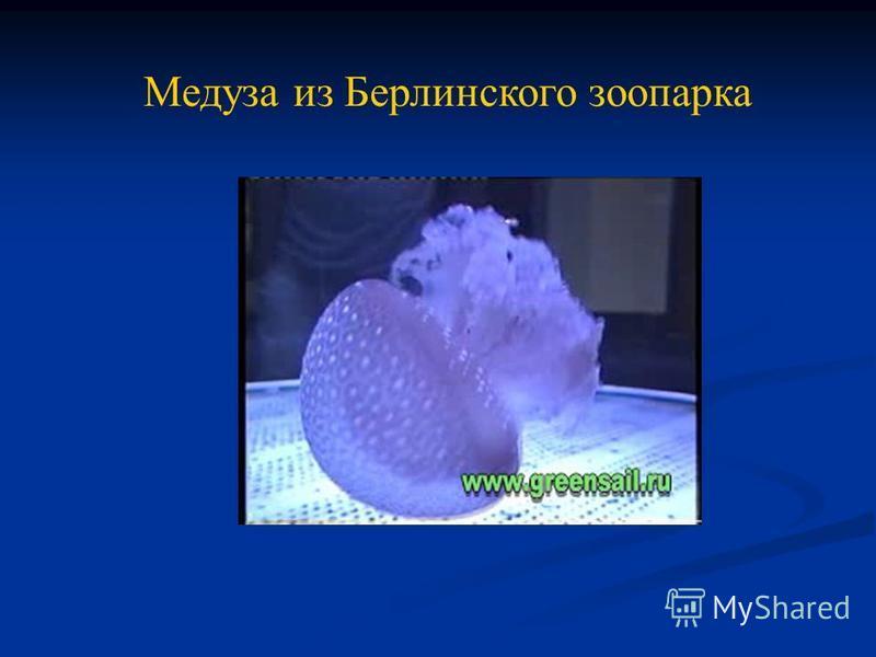 Медуза из Берлинского зоопарка