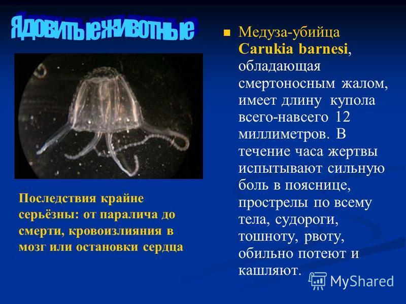 Медуза-убийца Carukia barnesi, обладающая смертоносным жалом, имеет длину купола всего-навсего 12 миллиметров. В течение часа жертвы испытывают сильную боль в пояснице, прострелы по всему тела, судороги, тошноту, рвоту, обильно потеют и кашляют. Посл