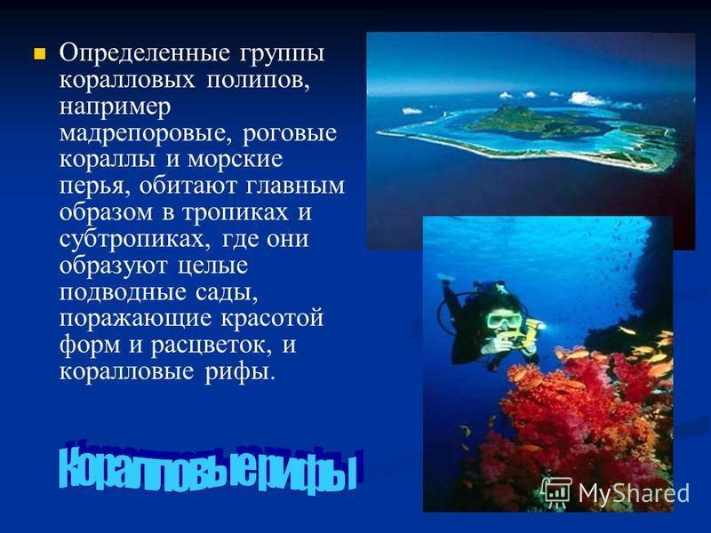 Определенные группы коралловых полипов, например мадрепоровые, роговые кораллы и морские перья, обитают главным образом в тропиках и субтропиках, где они образуют целые подводные сады, поражающие красотой форм и расцветок, и коралловые рифы.