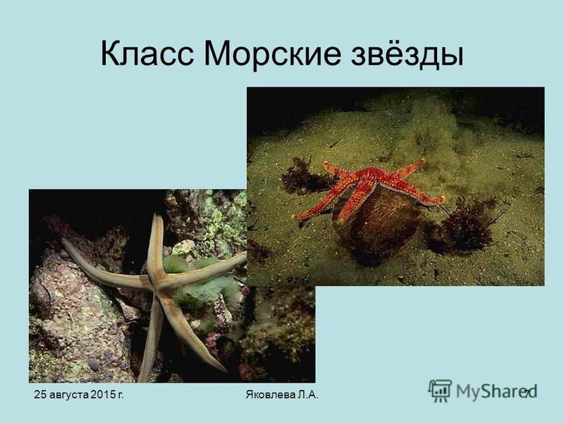 25 августа 2015 г.Яковлева Л.А.7 Класс Морские звёзды