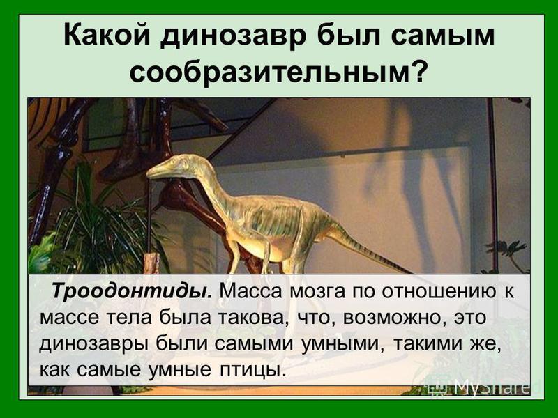 Какой динозавр был самым сообразительным? Троодонтиды. Масса мозга по отношению к массе тела была такова, что, возможно, это динозавры были самыми умными, такими же, как самые умные птицы.
