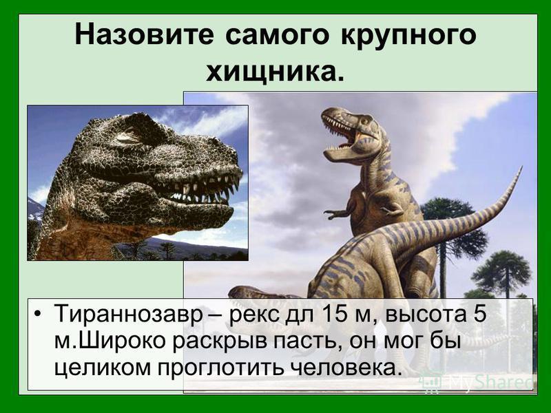 Назовите самого крупного хищника. Тираннозавр – рекс дл 15 м, высота 5 м.Широко раскрыв пасть, он мог бы целиком проглотить человека.