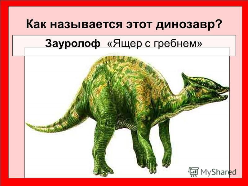 Как называется этот динозавр? Зауролоф «Ящер с гребнем»