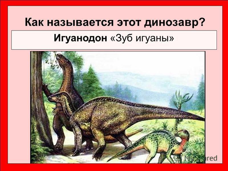 Как называется этот динозавр? Игуанодон «Зуб игуаны»