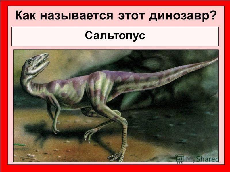 Как называется этот динозавр? Сальтопус