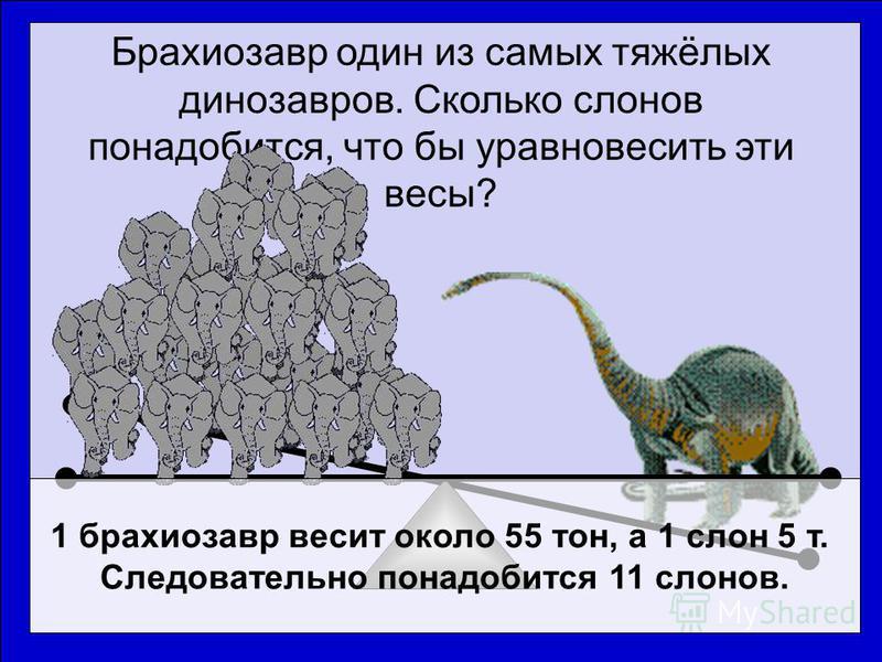 Брахиозавр один из самых тяжёлых динозавров. Сколько слонов понадобится, что бы уравновесить эти весы? 1 брахиозавр весит около 55 тон, а 1 слон 5 т. Следовательно понадобится 11 слонов.