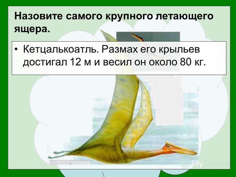 Кетцалькоатль. Размах его крыльев достигал 12 м и весил он около 80 кг. Назовите самого крупного летающего ящера.