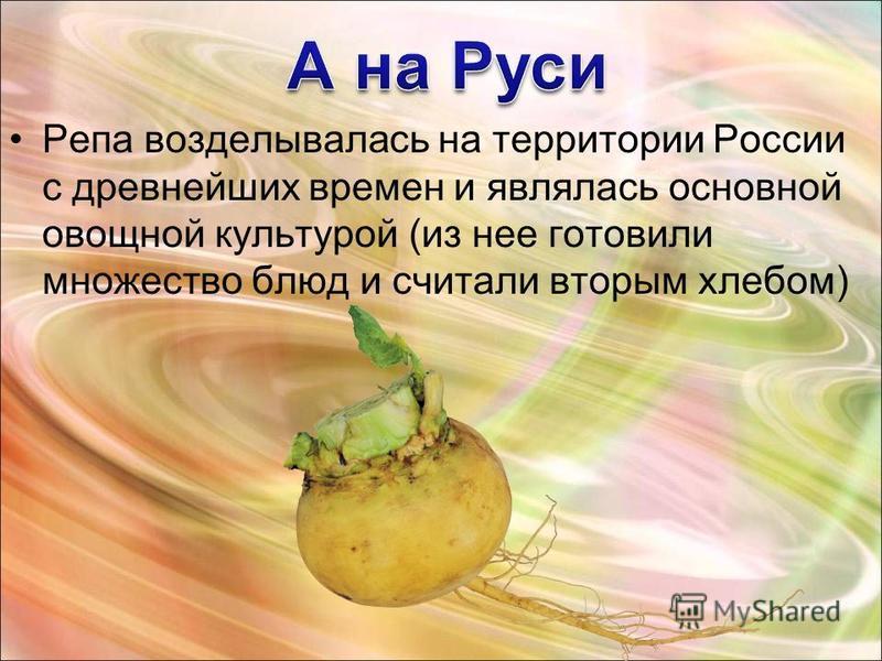 Репа возделывалась на территории России с древнейших времен и являлась основной овощной культурой (из нее готовили множество блюд и считали вторым хлебом)