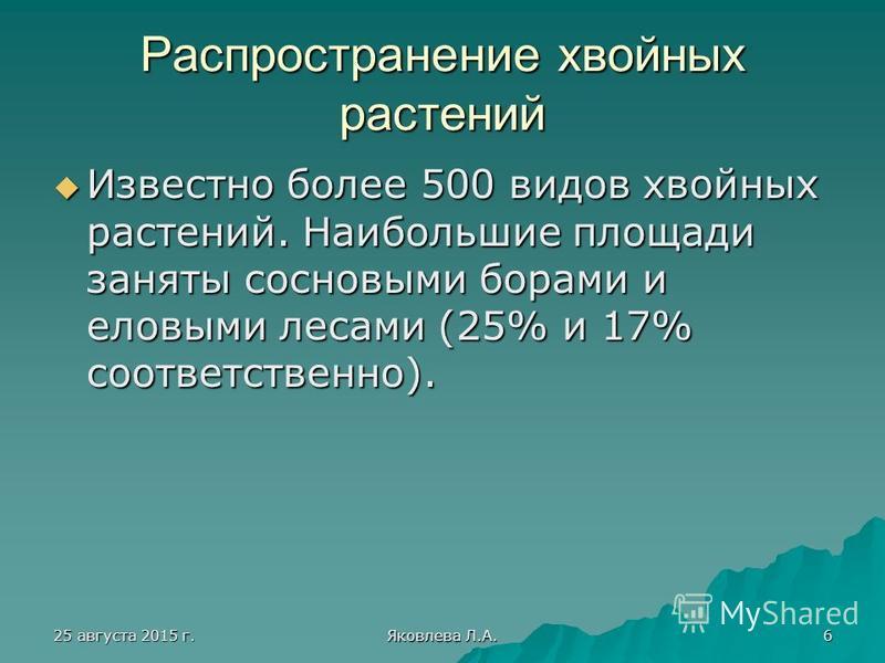 25 августа 2015 г.25 августа 2015 г.25 августа 2015 г.25 августа 2015 г. Яковлева Л.А. 6 Распространение хвойных растений Известно более 500 видов хвойных растений. Наибольшие площади заняты сосновыми борами и еловыми лесами (25% и 17% соответственно