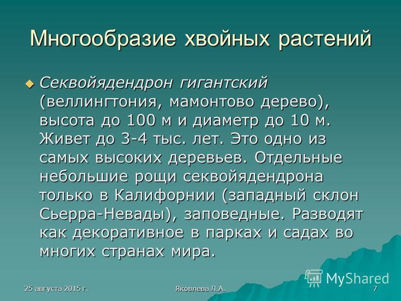 25 августа 2015 г.25 августа 2015 г.25 августа 2015 г.25 августа 2015 г. Яковлева Л.А. 7 Многообразие хвойных растений Секвойядендрон гигантский (веллингтония, мамонтово дерево), высота до 100 м и диаметр до 10 м. Живет до 3-4 тыс. лет. Это одно из с