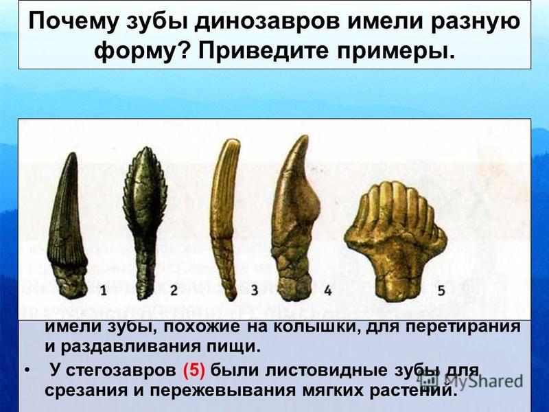 У теризинозавров ноги были похожи на птичьи, морда заканчивалась беззубым клювом, на каждой лапе было по четыре функциональных пальца. Почему теризинозавр считается самым нелепым?