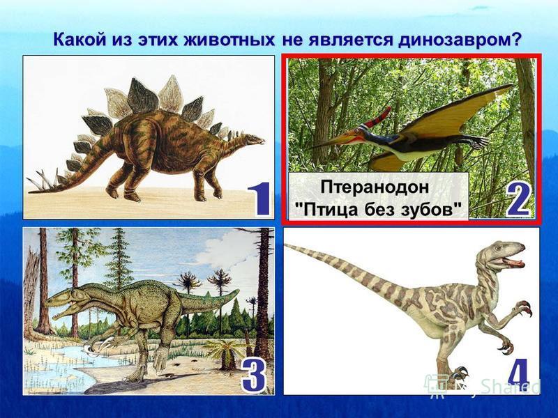Какой из этих динозавров является хищником? Дейнонихус «Ужасный коготь»