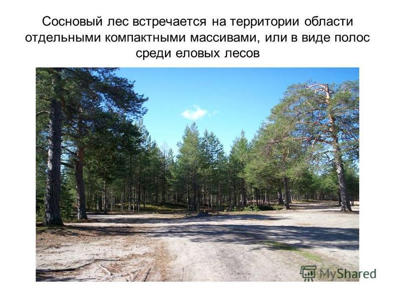 Сосновый лес встречается на территории области отдельными компактными массивами, или в виде полос среди еловых лесов