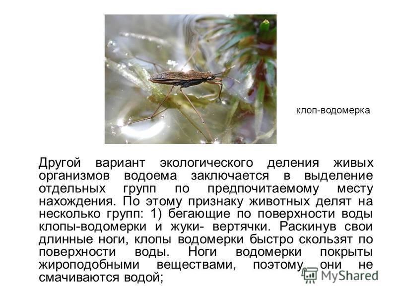 Другой вариант экологического деления живых организмов водоема заключается в выделение отдельных групп по предпочитаемому месту нахождения. По этому признаку животных делят на несколько групп: 1) бегающие по поверхности воды клопы-водомерки и жуки- в