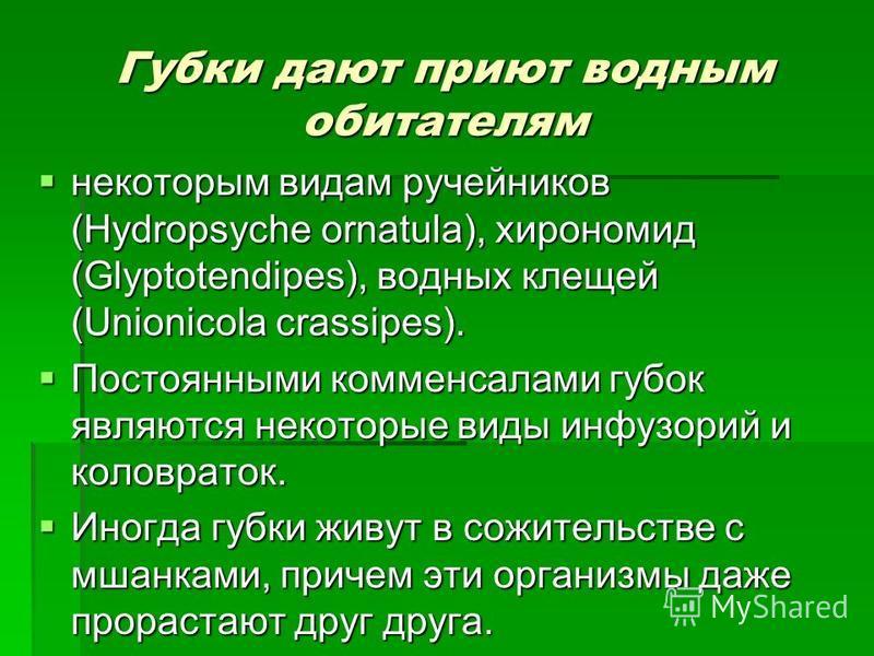 Губки дают приют водным обитателям некоторым видам ручейников (Hydropsyche ornatula), хирономид (Glyptotendipes), водных клещей (Unionicola crassipes). некоторым видам ручейников (Hydropsyche ornatula), хирономид (Glyptotendipes), водных клещей (Unio