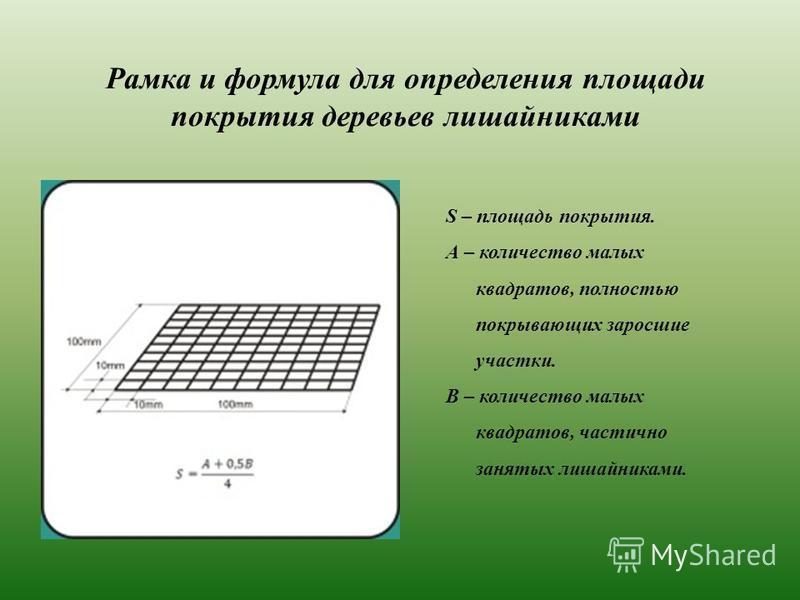 Рамка и формула для определения площади покрытия деревьев лишайниками S – площадь покрытия. А – количество малых квадратов, полностью покрывающих заросшие участки. В – количество малых квадратов, частично занятых лишайниками.