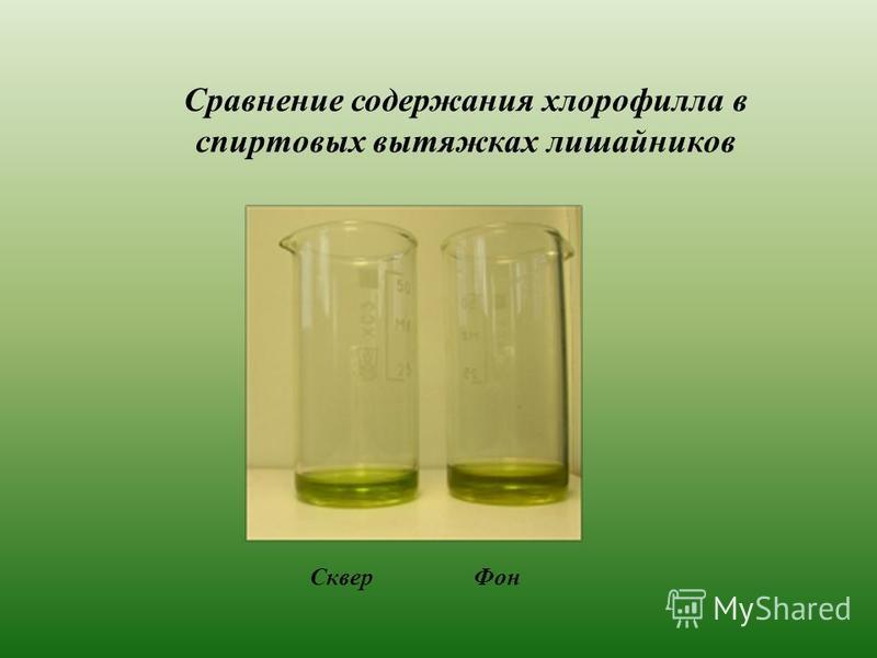 Сравнение содержания хлорофилла в спиртовых вытяжках лишайников Сквер Фон